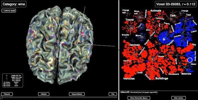 Human Brain Tracker